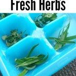 how to freezer herbs